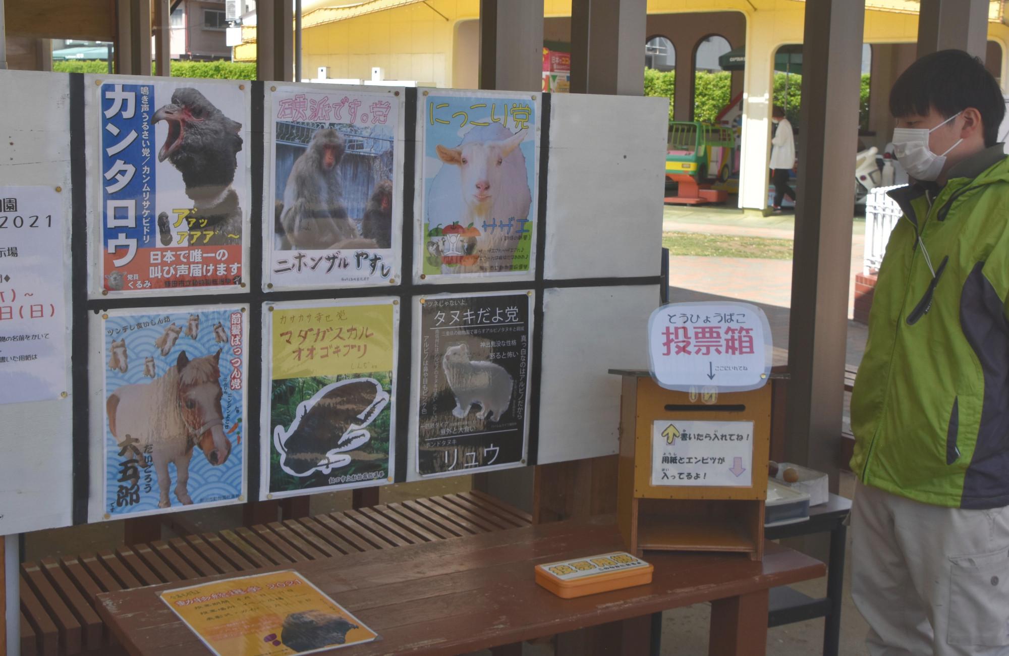 園の顔選ぶ「総選挙」は6匹の争い 飯田市立動物園