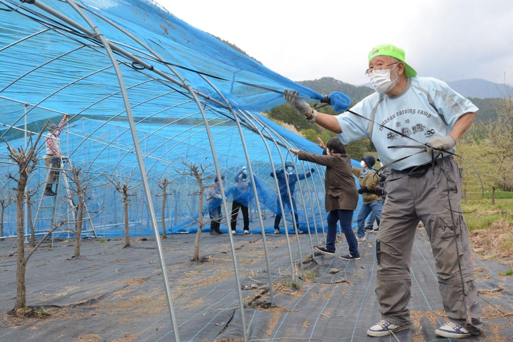 エメラルドグリーンの絹を作る「天蚕」 飼育、織物体験に向け準備 安曇野