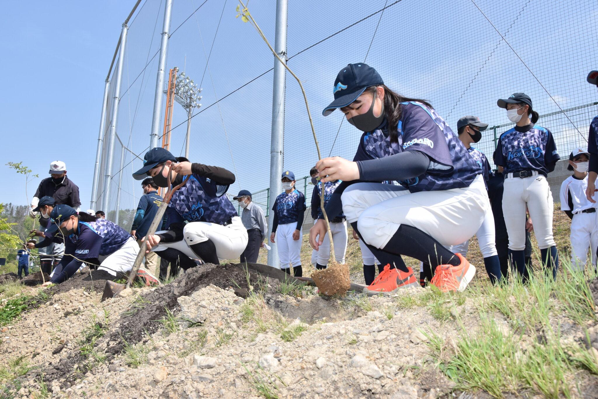 バットの原料アオダモを植樹 感染収束願い 松本国際高女子硬式野球部